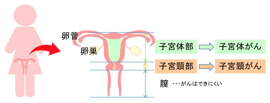 子宮の部位の名前